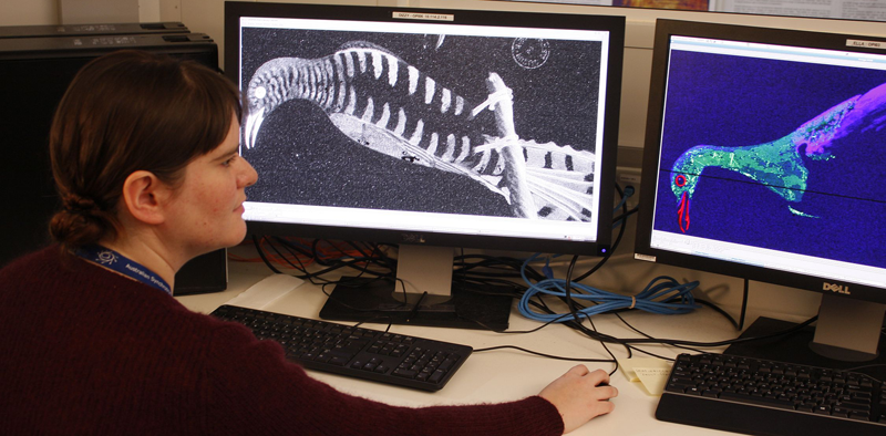 Kate Hughes (SLNSW) examines the results of her x-ray examination of the bird drawings