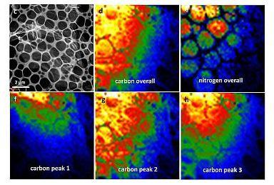 Scanning TEM images of C3N4 nanosheet